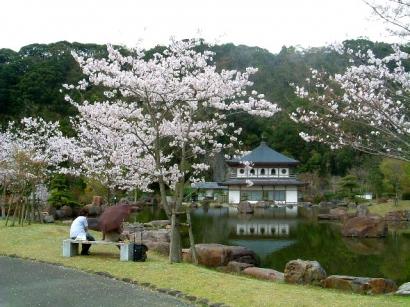 岩屋公園~桜のライトアップ完了しました~